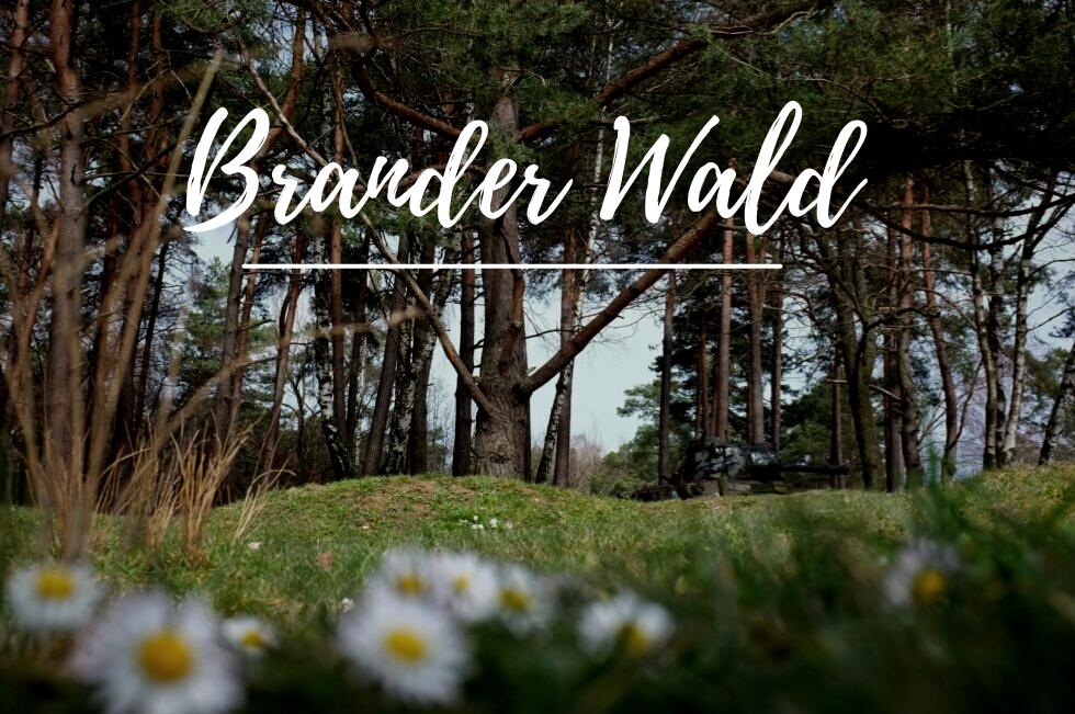 Naturschutzgebiet Brander Wald
