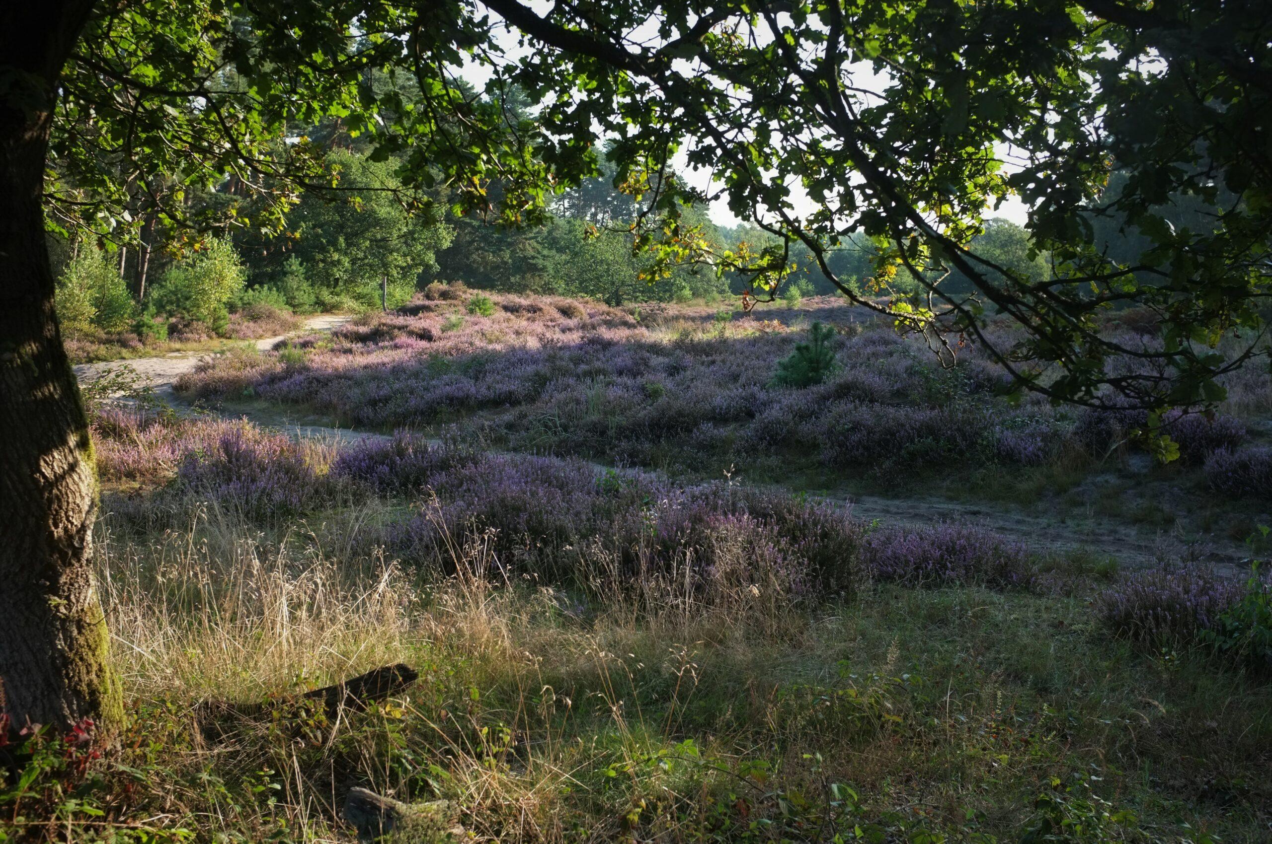 Naturschutzgebiet Wahner Heide