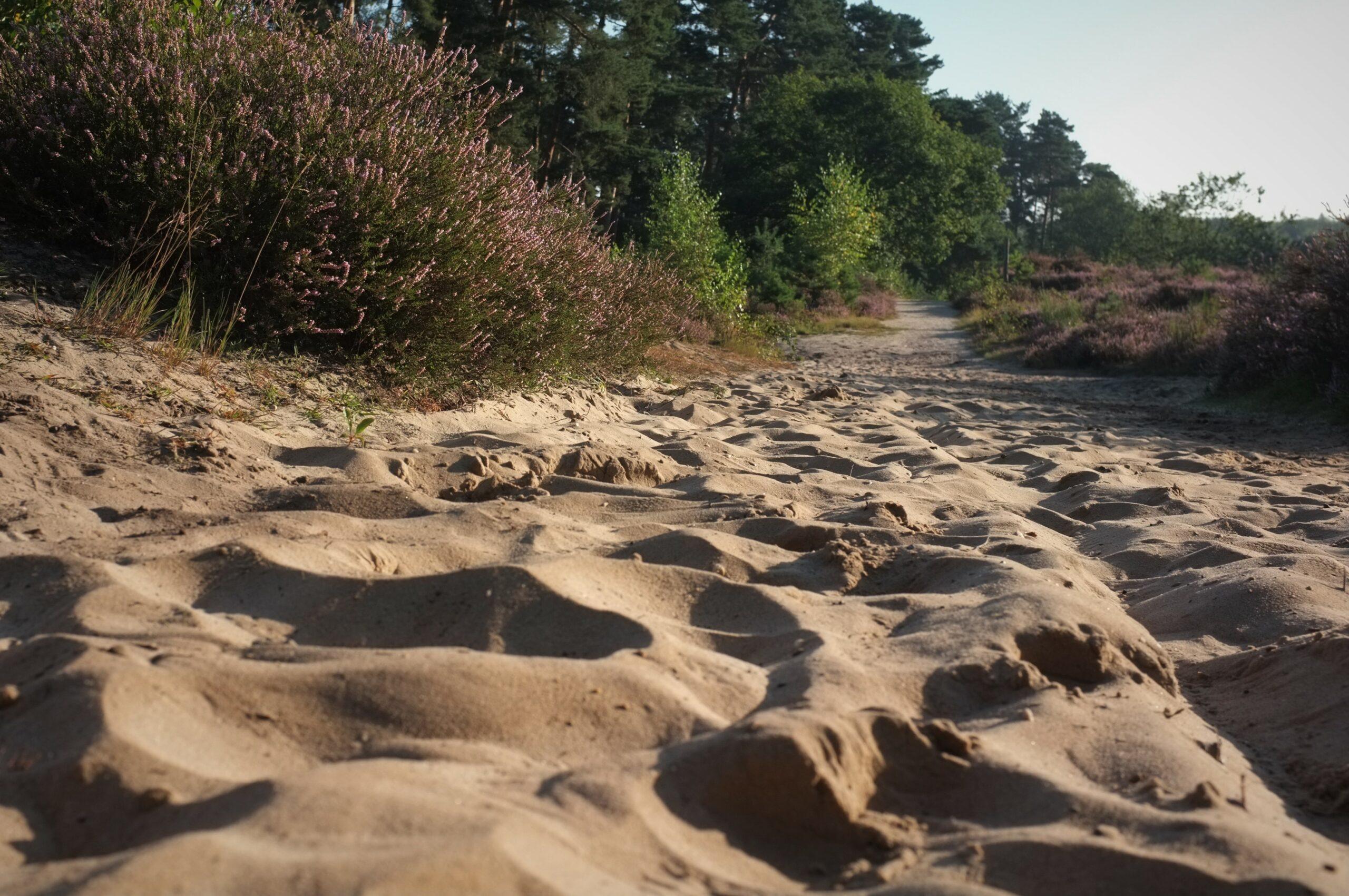 Sandboden Wahner Heide