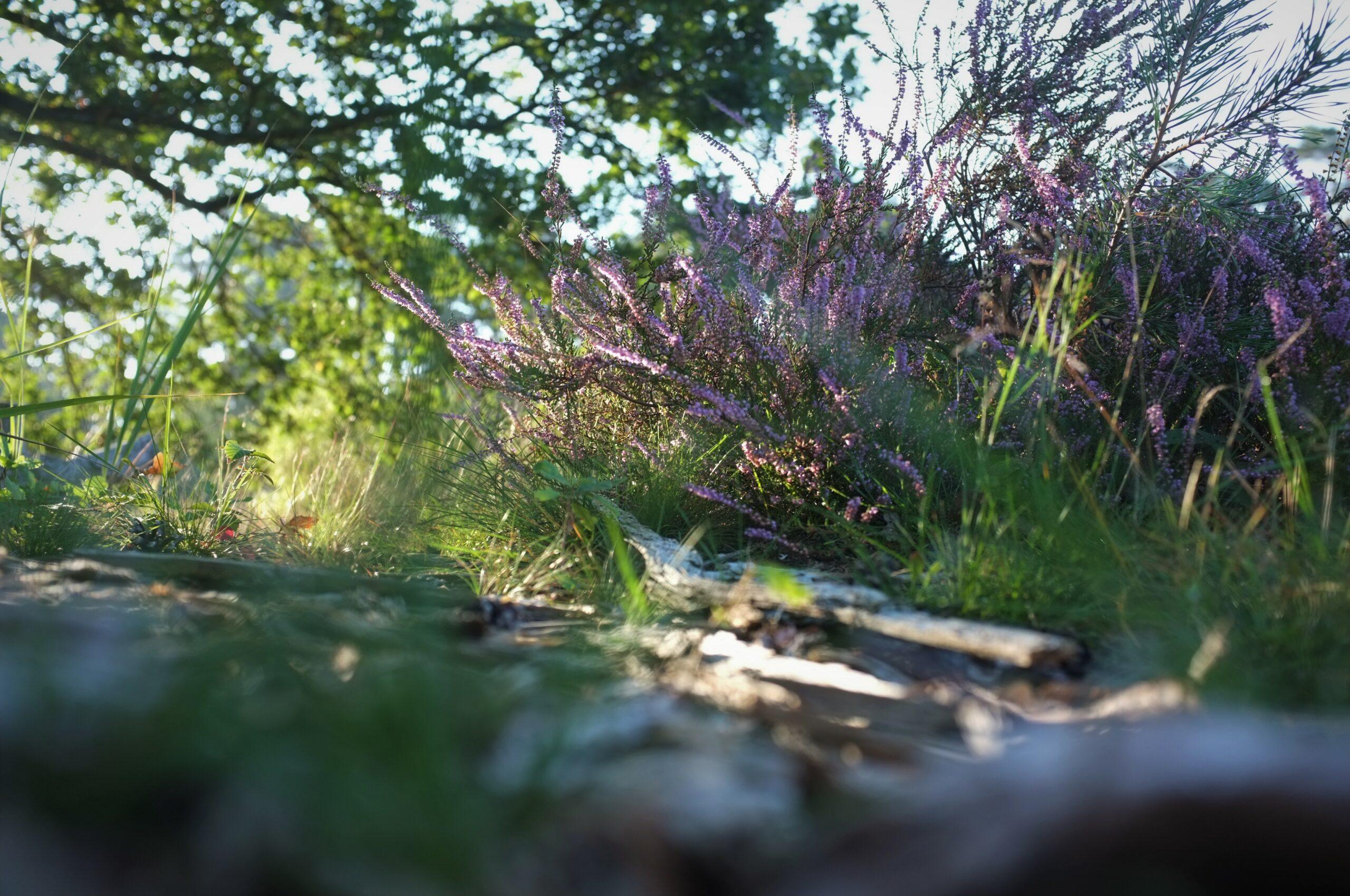 Wahner Heide Landschaft